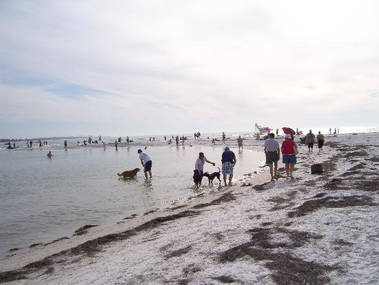 dogs Honeymoon island