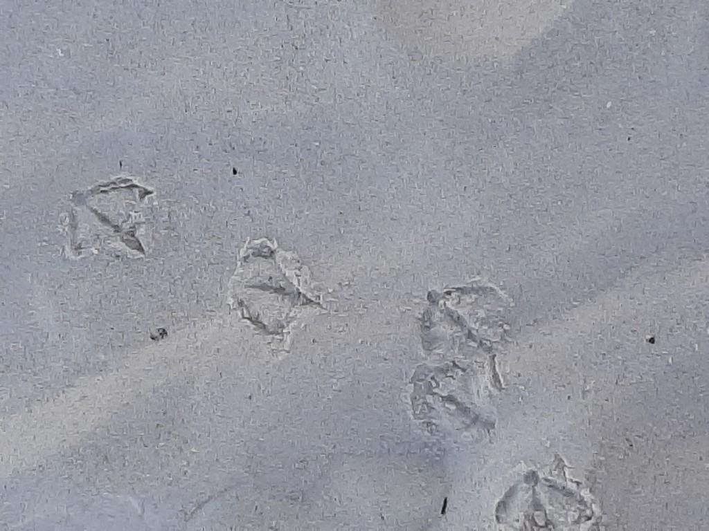 seagull tracks